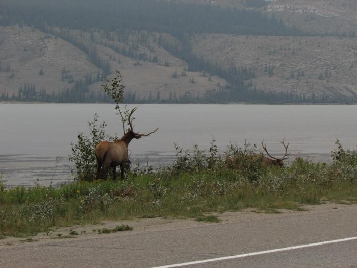 Banff 262