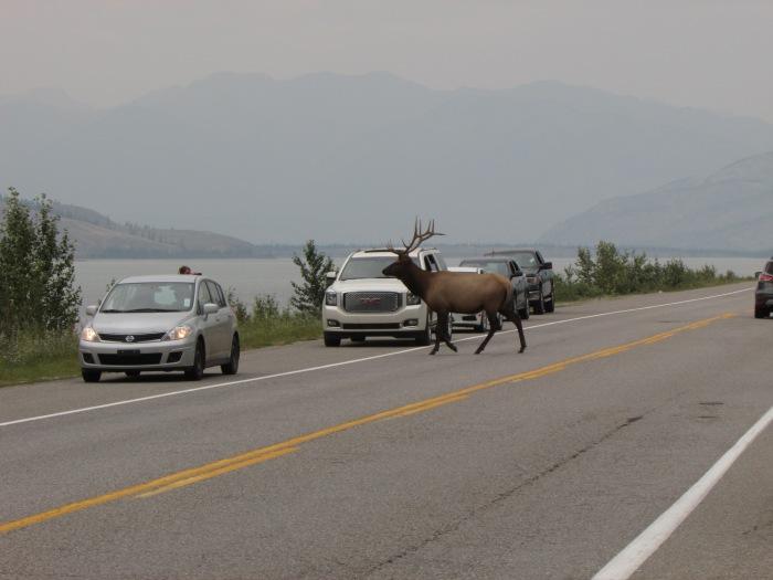 Banff 263